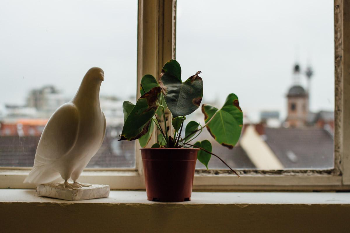 Taubenskulptur und Zimmerpflanze auf Fensterbrett