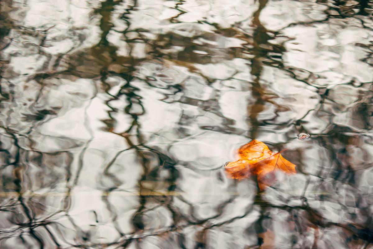 Oranges Kastanienblatt schwimmt an brauner Wasseroberfläche