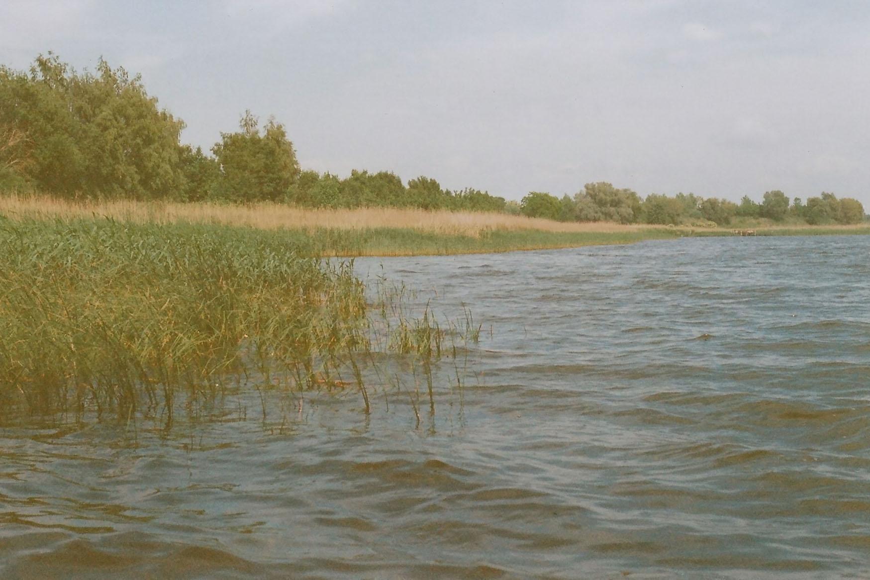 Blick auf die Uferzone des Flusses