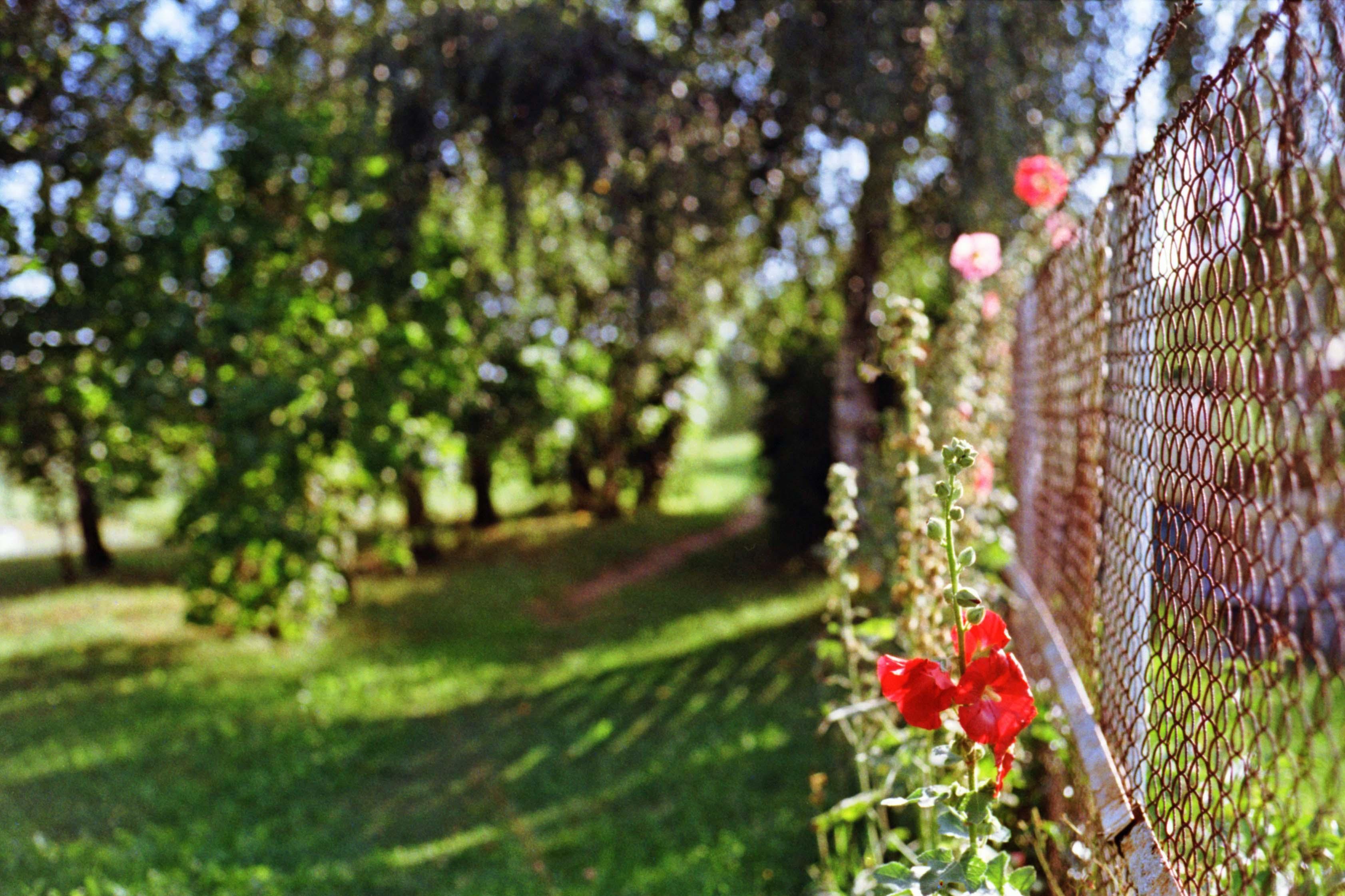 Sommerblumen am Gartenzaun