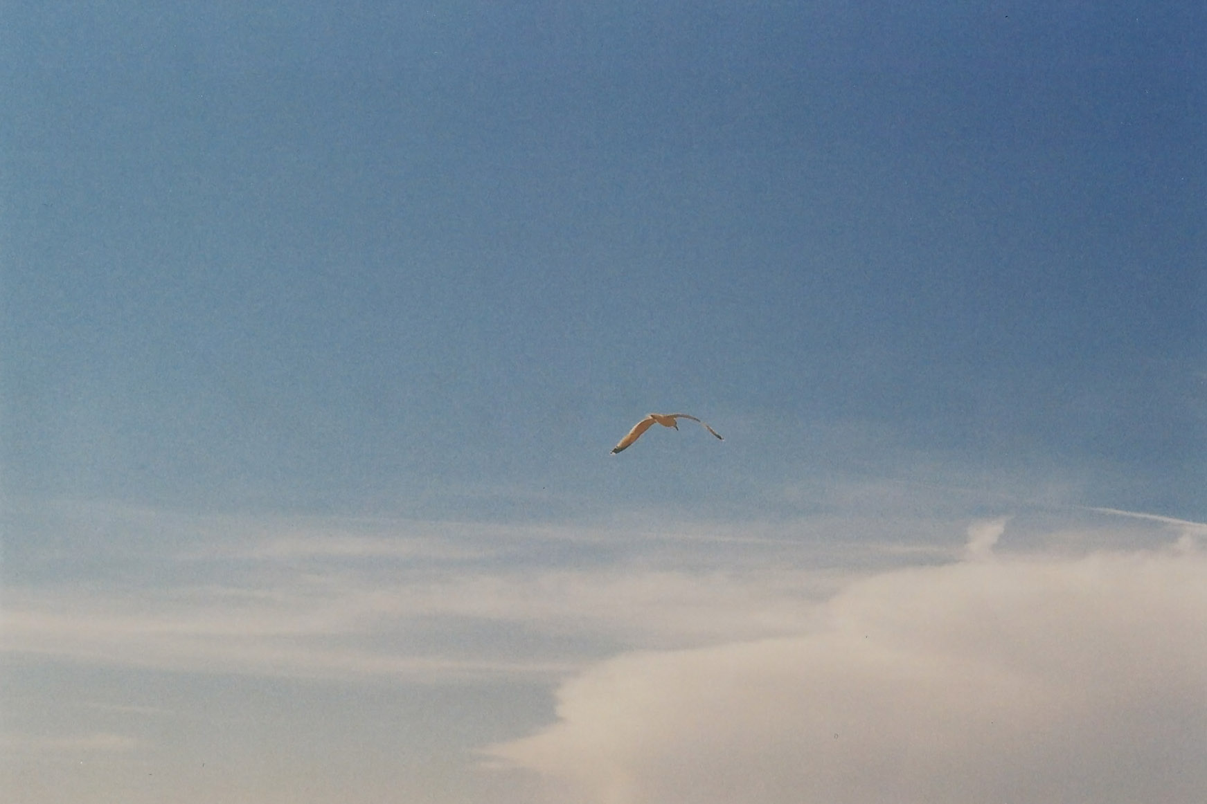 Einzelne vor blauem Himmel und Wolken
