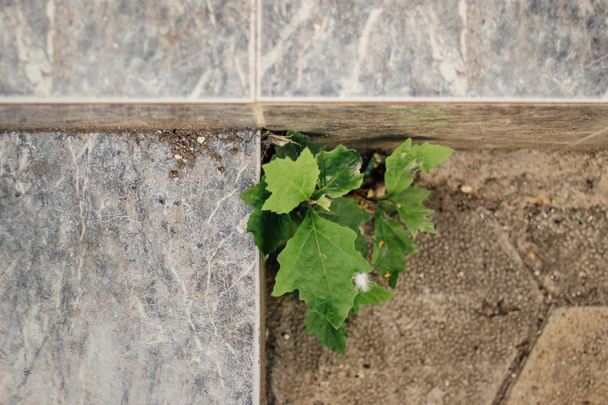 Pflanze wächst in einer Ecke von gefliester Türschwelle
