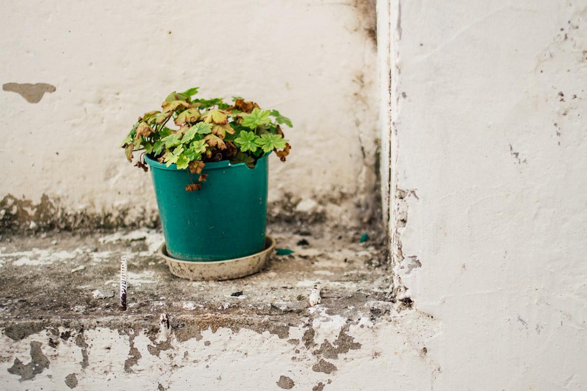 Pflanze in grünem Top auf weißer Mauer