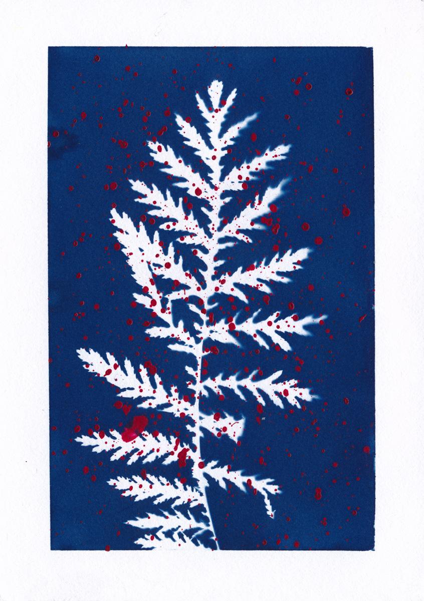 Cyanotype eines Blattes mit roter Farbsprenkeln