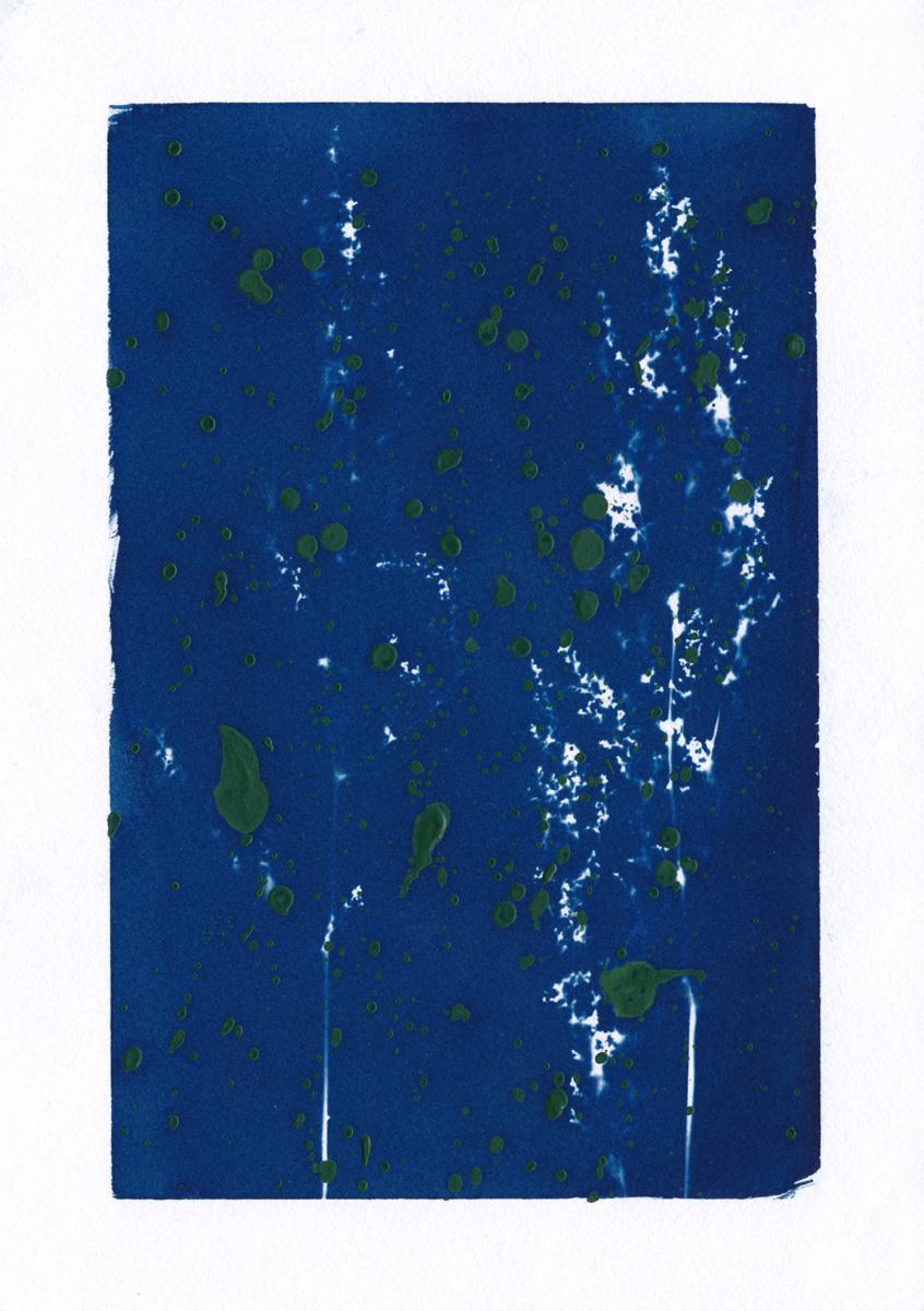 Cyanotype von Sauerampfer mit grünen Farbsprenkeln
