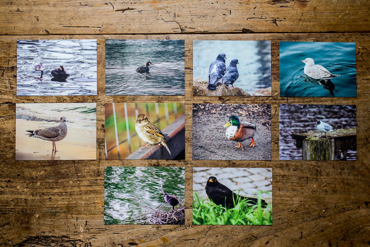 10 Postkarten mit Bildern von Vögeln