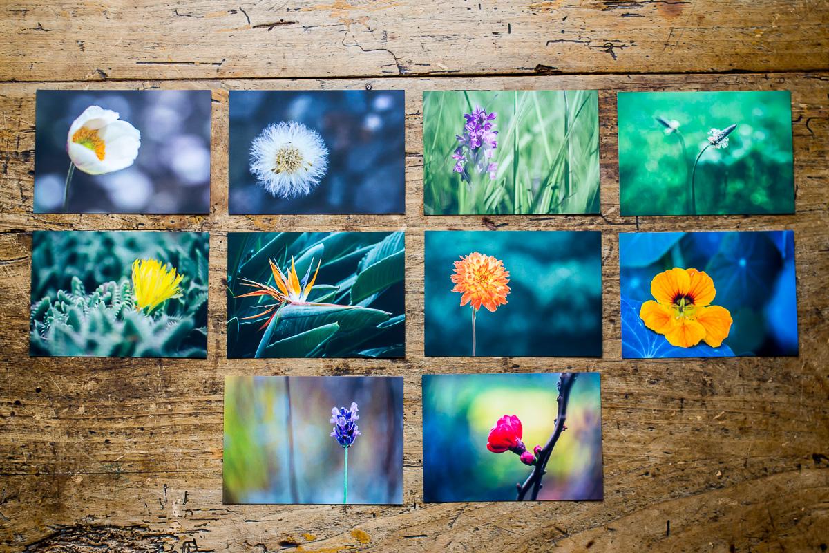 10 Postkarten mit Bildern von Blumen