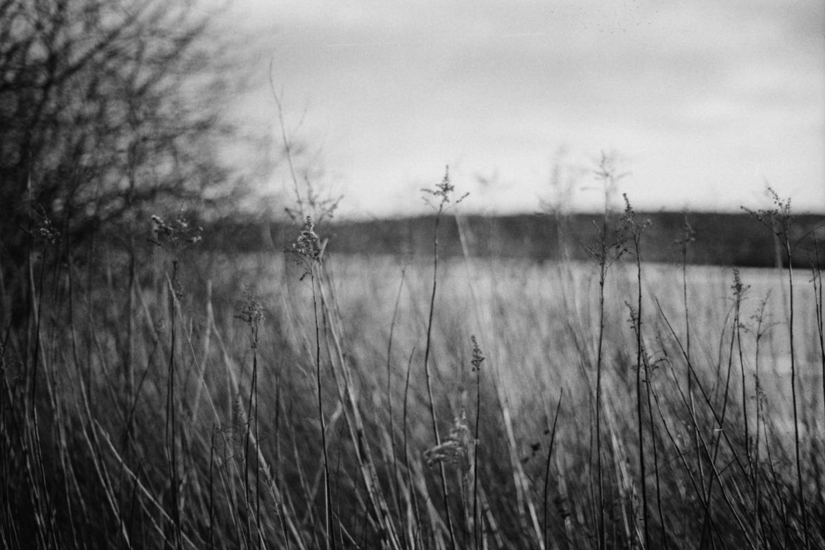 Vertrocknete Gräser am Seeufer