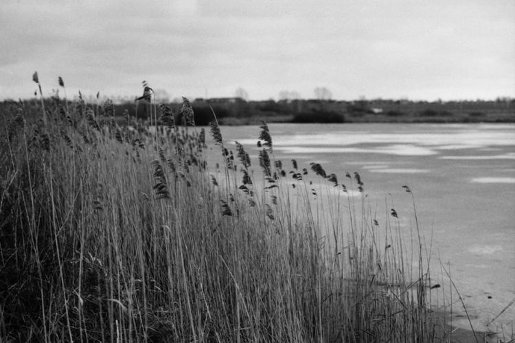 Schilf am Seeufer mit Landschaft im Hintergrund