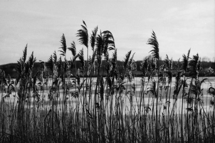 Nahaufnahme von Schilf mit See und Hügel im Hintergrund